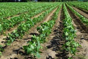相続財産「農地」と「生命保険」について